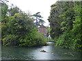 TL3606 : New River, Broxbourne, Hertfordshire by Christine Matthews