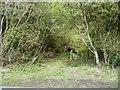 SH8565 : Entrance to Long Covert, near Bodunig by Christine Johnstone