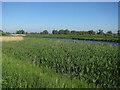 TL6886 : Little Ouse River by Hugh Venables