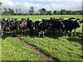SO3010 : Friesian cows by Andrew Abbott