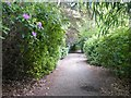 TQ1362 : Rhododendron-lined path in Claremont Landscape Garden by Graham Hogg