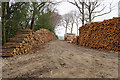 NY9563 : Piles of logs by Cock Wood by Bill Boaden