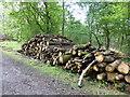 SK9519 : Timber stacks by Bob Harvey