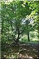 TL4306 : Hornbeam Coppice in Risden's Wood by Glyn Baker