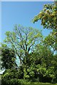 ST4200 : Trees by the Char by Derek Harper