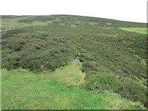 NO1805 : Path at top of Edge Head, Lomond Hills by Bill Kasman