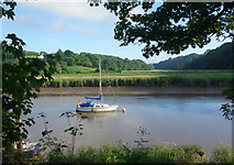 SX4268 : The Tamar Valley at Calstock by Des Blenkinsopp