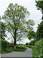 SO3226 : Tree under offer, north of Glan Monnow? by Christine Johnstone