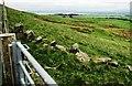 NO1805 : Path to Glenlomond, Lomond Hills by Bill Kasman