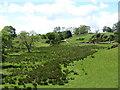 NZ0918 : Valley of Newsham Beck by Gordon Hatton