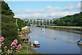 SX4268 : River Tamar at Calstock by Des Blenkinsopp