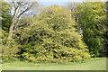 SH5571 : Derwen Lucombe at Treborth Botanic Gardens by Jeff Buck