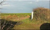 SX0271 : Field by lane to Trevilder by Derek Harper