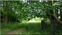 SK5802 : Trees at the former St Mary's Allotments by Mat Fascione