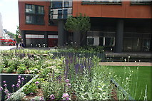 TQ2681 : View of flowers in Floating Pocket Park in the Paddington Basin by Robert Lamb