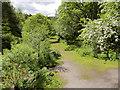 NT2762 : Riverside Path, Roslin Glen by David Dixon
