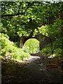 NT2762 : Rosslyn Castle, The Bridge by David Dixon