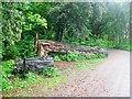SX5155 : Fallen tree on the Saltram Estate, Plympton, Devon by Derek Voller