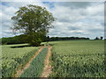 TL1329 : Solitary tree in the middle of a field, Offley by Humphrey Bolton