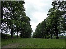 NZ1758 : The Avenue, Gibside by PAUL FARMER