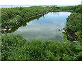 NU2135 : Pond on Inner Farne by PAUL FARMER