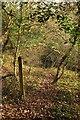 SW9969 : Path to Hustyn Mill by Derek Harper