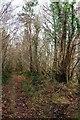 SX0068 : Path junction, Hustyn Wood by Derek Harper