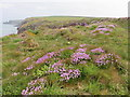 SM7809 : The Pembrokeshire Coast Path near Eastfield Farm by Dave Kelly