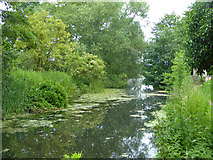 TM0855 : River Gipping by Robin Webster