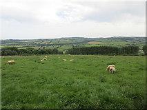 X0194 : Grass field with sheep near Curraheen South by Jonathan Thacker