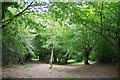 TQ3991 : Walthamstow Forest by Glyn Baker