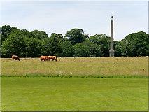 ST7734 : Stourhead Estate, The Obelisk by David Dixon
