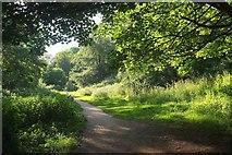 SX8963 : Torbay-Totnes Trail in Cockington valley by Derek Harper
