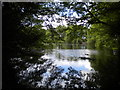 SK1000 : South end of Mill Pond, Hill Hook Nature Reserve by Richard Vince