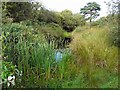 NY2061 : Pond with reedmace by Rose and Trev Clough