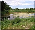 TG3205 : Pond in Wheatfen Broad nature reserve by Evelyn Simak
