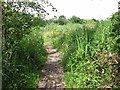 TG3205 : Boardwalk in Wheatfen Broad nature reserve by Evelyn Simak
