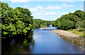 NZ0416 : River Tees Upstream from the Deepdale Aqueduct by Chris Heaton