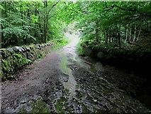 NO2307 : Old estate road, Lomond Hills by Bill Kasman