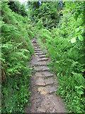 NO2307 : Path to Maspie Den, Lomond Hills by Bill Kasman