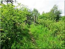 NO2306 : Coalpit Community Woodlands, Lomond Hills by Bill Kasman