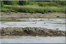 NR8262 : Heron fishing by Russel Wills
