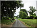 X1099 : Driveway to Cappoquin House Gardens by Jonathan Thacker