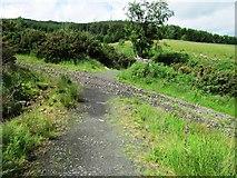 NO2307 : Paths on Lomond hills by Bill Kasman