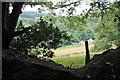 ST1441 : Hillside above Hodder's Combe by Bill Boaden