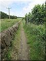 NO2603 : Path to Purin Hill, Lomond Hills by Bill Kasman