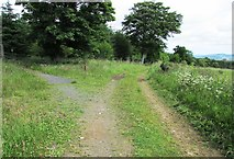 NO2505 : Path to Purin Hill, Lomond Hills by Bill Kasman