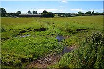 ST0007 : Mid Devon : Grassy Field by Lewis Clarke