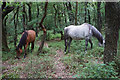 ST1638 : Ponies in the forest by Bill Boaden