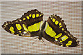SP0485 : Butterfly - Birmingham Botanical Gardens by Stephen McKay